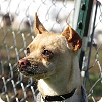 Adopt A Pet :: Fred - Meridian, ID