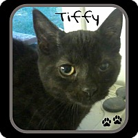 Adopt A Pet :: Tiffy - Princeton, WV