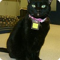 Adopt A Pet :: Cairo - Lakewood, CO