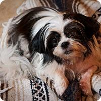 Adopt A Pet :: Ricky - Holmes Beach, FL