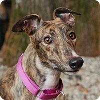 Adopt A Pet :: Mayfly - Ware, MA