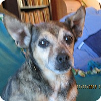 Feist Mix Dog for adoption in Centerville, Tennessee - precious