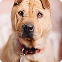 Adopt A Pet :: Honey - Portland, OR