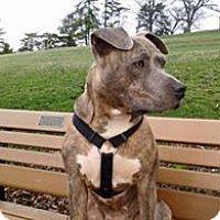 Adopt A Pet :: Liberty - East McKeesport, PA