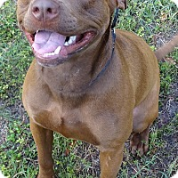 Adopt A Pet :: TUCKER - Brooksville, FL
