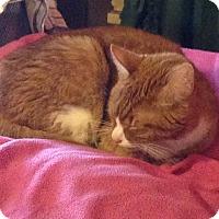 Adopt A Pet :: Bud - Hopkinsville, KY