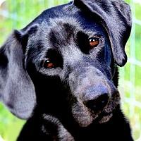 Adopt A Pet :: OLIVER(A FAMILIES BEST FRIEND! - Wakefield, RI