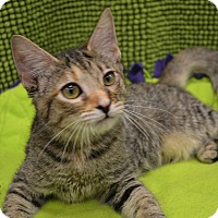 Adopt A Pet :: DESTINY - I'M YOUR DESTINY - Plano, TX