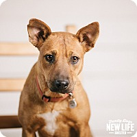 Adopt A Pet :: Nell - Portland, OR