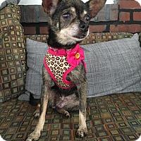 Adopt A Pet :: VIVIAN! - Philadelphia, PA