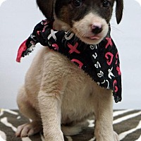 Adopt A Pet :: Glinda - Waterbury, CT
