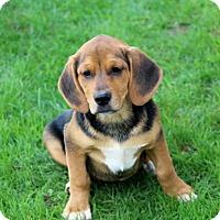 Adopt A Pet :: Mojo - Liberty Center, OH