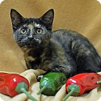 Adopt A Pet :: Jalapeno - Morgantown, WV