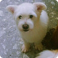 Adopt A Pet :: Goofy - Fairfax, VA