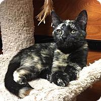 Adopt A Pet :: Sunset - san diego, CA
