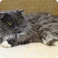 Adopt A Pet :: Strawberry - Gardnerville, NV