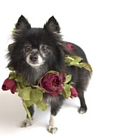 Adopt A Pet :: Evening - Dallas, TX