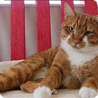 Adopt A Pet :: Costa - Albuquerque, NM