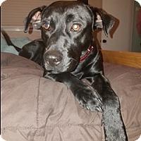 Adopt A Pet :: Thomas - Brattleboro, VT