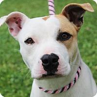 Adopt A Pet :: DIAMOND - Red Bluff, CA