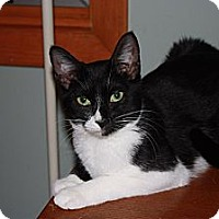 Adopt A Pet :: Chip (LE) - Little Falls, NJ