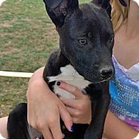 Adopt A Pet :: Ace - Ranger, TX