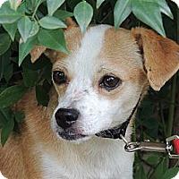 Adopt A Pet :: Junebug - Houston, TX