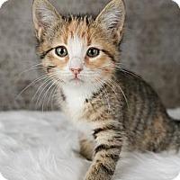 Adopt A Pet :: Dottie - Eagan, MN