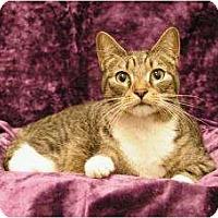 Adopt A Pet :: Rascal - Sacramento, CA