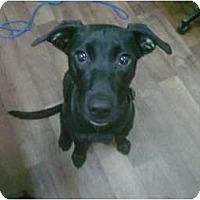 Adopt A Pet :: Aeryn - Cumming, GA