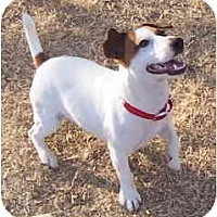 Adopt A Pet :: KIPPER - Phoenix, AZ