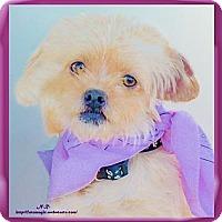 Adopt A Pet :: Millie fun no hang ups - Sacramento, CA