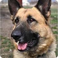 Adopt A Pet :: Lando - Hamilton, MT