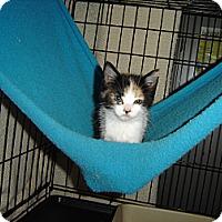 Adopt A Pet :: Sweet Pea - Mundelein, IL