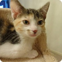 Adopt A Pet :: Lizzie - Colmar, PA