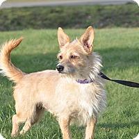 Adopt A Pet :: Sinbad - Tumwater, WA