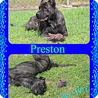 Adopt A Pet :: Preston - Tampa, FL