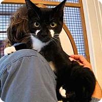 Adopt A Pet :: Elwood - Davis, CA