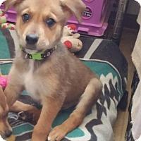 Adopt A Pet :: Boston - Flemington, NJ