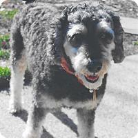 Adopt A Pet :: Oscar~ADOPTION PENDING - Sharonville, OH