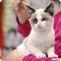 Adopt A Pet :: Felix - Westchester, CA
