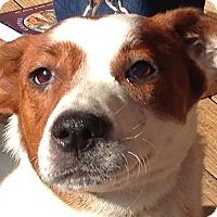 Adopt A Pet :: Khloe - Allentown, PA
