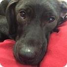 Adopt A Pet :: LEXIE