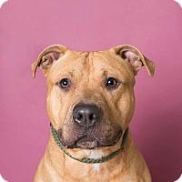 Adopt A Pet :: Gomez - Brookhaven, NY