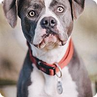 Adopt A Pet :: Nellie - Portland, OR