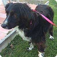 Adopt A Pet :: Meggie - New Oxford, PA