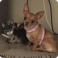 Adopt A Pet :: Kiki - San Diego, CA