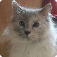 Adopt A Pet :: Moon - Purebred - Ennis, TX
