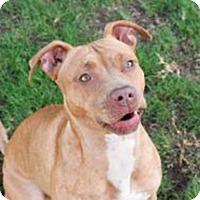 Adopt A Pet :: Josie - Palm Springs, CA