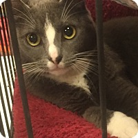 Adopt A Pet :: Karen - Monroe, GA